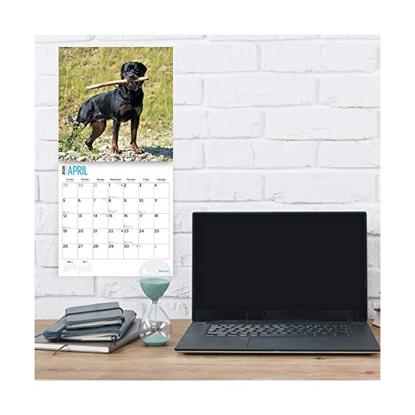 2020 Rottweilers Wall Calendar by Bright Day, 16 Month 12 x 12 Inch, Cute Dogs Puppy Animals Rottie's Canine 3