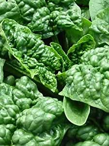 200+ Spinach Seeds- Bloomsdale Savoy- Heirloom Variety