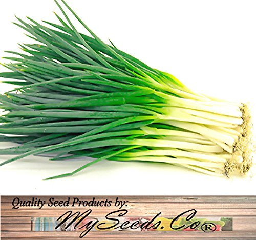 ONION CHIVES - FRENCH CULINARY CHIVE seeds - Grown For It's Leaves, Pkt or BP