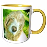Soulful Cocker Spaniel Face Mug is available in both 11 oz and 15 oz. Why drink out of an ordinary mug when a custom printed mug is so much cooler? This ceramic mug is lead free, microwave safe and FDA approved. Image is printed on both sides...