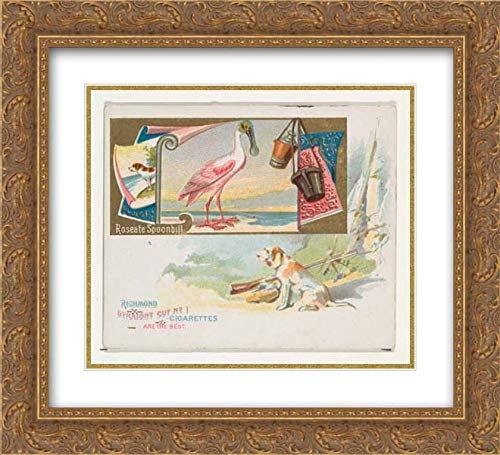 (Allen & Ginter - 22x20 Gold Ornate Frame and Double Matted Museum Art Print - Roseate Spoonbill, from The Game Birds Series (N40) for Allen & Ginter Cigarettes)