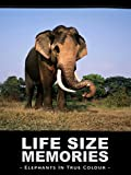 Life Size Memories: Elephants in True Colour