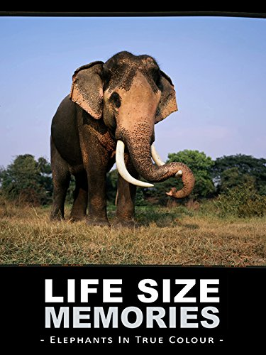 Life Size Memories: Elephants in True Colour by
