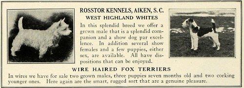 Terrier Breeders (1930 Ad Wire Haired Fox Terrier West Highland White Dog Breeder Rosstor Kennels - Original Print Ad)