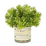Creative Displays Jade Plant in French Label Decoupage Glass Vase