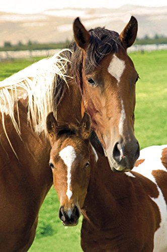 Horses Mare and Foal Art Print Poster - 24x36 Animal Poster