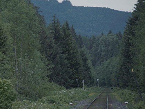 Trail Breaker - BC Bear