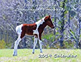 img - for Foals of the Wild Chincoteague Pony Herds - 2019 Calendar book / textbook / text book