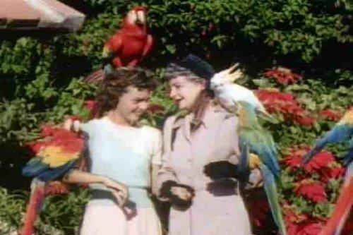 Vintage Florida Travelogue Films - Gables Coral Park