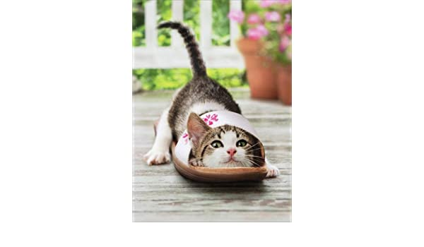 Amazon com : Kitten In Shoe - Avanti Cat Mother's Day Card : Office