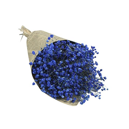 PPBUY Natural Dried Flower Baby's Breath Home Decor Dried Gypsophila Flower (Dark Blue)