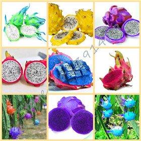 a95f70bdbabdc 50pcs   bag raras 9 tipos de semillas de pitaya