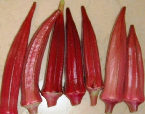 Organic Heirloom 100 Seeds Red Burgundy Okra Ladies Finger Abelmoschus Vegetable Seeds ()