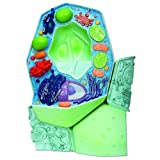 plant model - 3B Scientific R05 Plant Cell Model, Magnified 500000 - 1000,000 Times, 7.9
