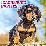 Just Dachshund Puppies 2021 Wall Calendar (Dog Breed Calendar)