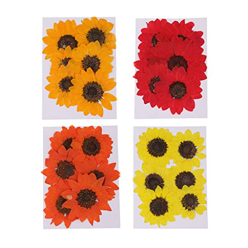 Baosity 24 Pieces Pressed Dried Real Flower Sunflower Scrapbooking Embellishments for Jewelry Making DIY Pendant Charms Resin Ornament Craft 4-6cm