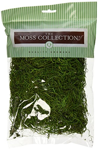 Preserved Spanish Moss 108.5 Cubic Inches-Apple Green (Spanish Hanging Moss)
