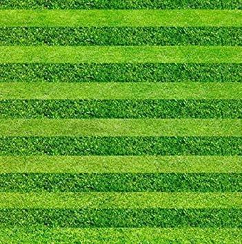 Vistaric 200 unids Césped Césped Semilla Bonsai Semillas Fresco Verde Suave Corredor Césped Natural Crecimiento Para Home Park Soccer Golf Place: Amazon.es: Jardín