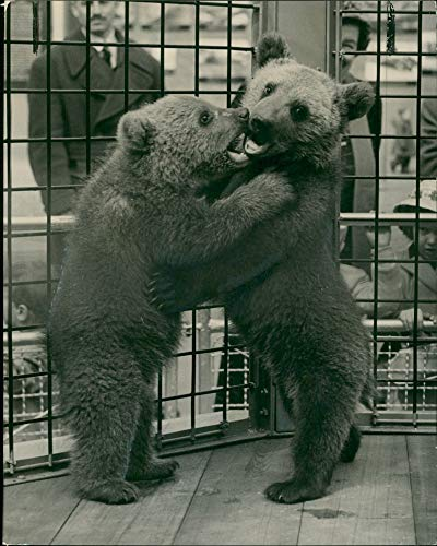 Vintage photo of Animal Brown Bear:Nikki wih his ()