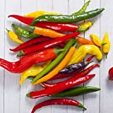 David's Garden Seeds Pepper Cayenne Blend DU9623 (Multi) 25 Non-GMO, Heirloom Seeds