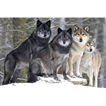 Pack Winter Wolf Art Print on Canvas,Wall Decor Poster 16x24 inches