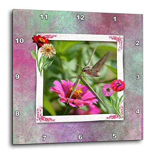 3dRose Beverly Turner Insect and Flora Photography - Hummingbird Hawk Moth with Tongue in Zinnia Flower, Elegant Frame - 10x10 Wall Clock (DPP_299608_1)