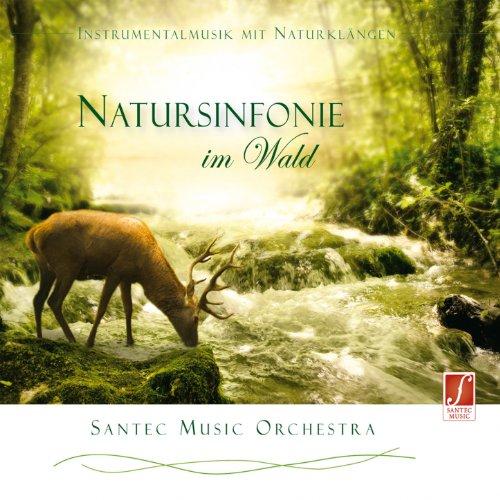 Crown of Trees in the Wind (Baumkrone im Wind) (Crown 20 Natural)