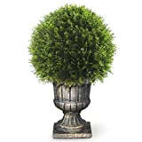 National Tree 27 Inch Upright Juniper Ball Topiary Tree in Decorative Urn (LCY4-704-27)