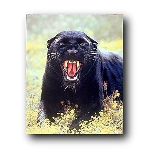 Black Panther Amazon