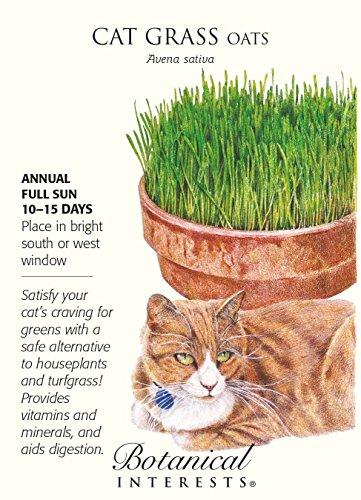 Cat Grass Oats Seeds Botanical