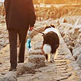 Dog Water Bottle for Walking, TIOVERY Pet Water