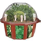 DuneCraft Dome Terrariums - Herbs