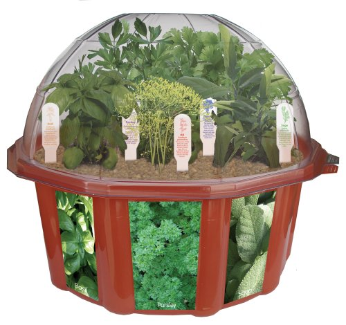 (DuneCraft Dome Terrariums - Herbs)