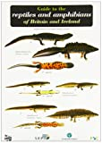 img - for Guide to the Reptiles and Amphibians of Britain and Ireland (Occasional Publications) book / textbook / text book