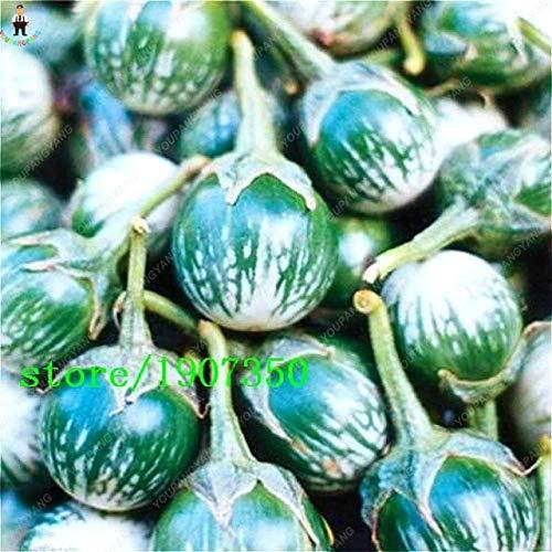 AGROBITS! Bonsai 100Pieces / Bolsa Deliciosa Berenjena púrpura ...