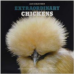 Amazon com: Extraordinary Chickens 2019 Wall Calendar (9781419729997