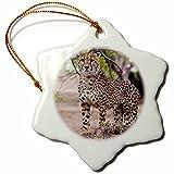 3dRose orn_71031_1 Cheetah, Kapama Game Reserve, South Africa-Af42 Spi0099-Sergio Pitamitz-Snowflake Ornament, 3-Inch, Porcelain