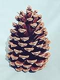 Bixby Blossom Farms Bag of 10 Pine Cones