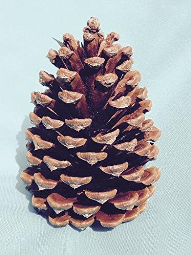 Bixby Blossom Farms Bag of 10 Pine Cones]()