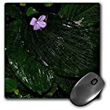 WhiteOak Photography Floral Prints - Tropical plant with large leaves and tiny flower - MousePad