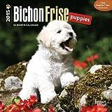 Bichon Frise Puppies 2015 Mini 7x7
