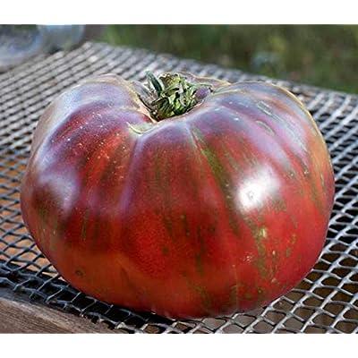 Temura Pink Berkeley Tye Dye Heirloom Tomato Premium Seed Packet : Garden & Outdoor