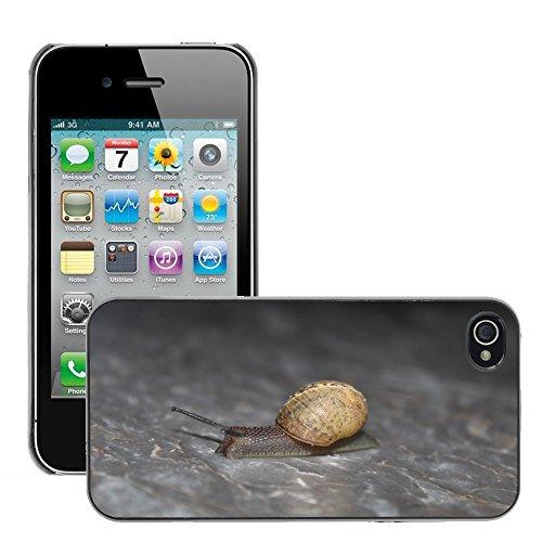 Bild Hart Handy Schwarz Schutz Case Cover Schale Etui // M00135408 Schnecke Tier Natur // Apple iPhone 4 4S 4G