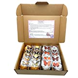 Relax & Beauty Collection Handmade Bath Bomb Gift Set, 8x4.5oz Large Size, Assorted Color/Effect, Natural Ingredient with Essential Oil, Moisturizing Skin, Great