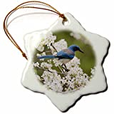 3dRose Danita Delimont - Songbirds - Western Scrub Jay in a Mexican Plum tree, Hill Country, Texas - 3 inch Snowflake Porcelain Ornament (orn_279583_1)