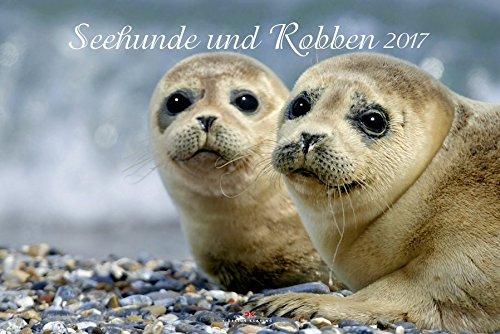seehunde-und-robben-2017