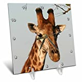 3dRose dc_20123_1 South African Giraffe Head Face Sky Background Desk Clock, 6 by 6-Inch