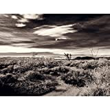 A Joshua Tree In Desert Scrub - Mojave National Preserve California Fine Art Photography Print Black and White