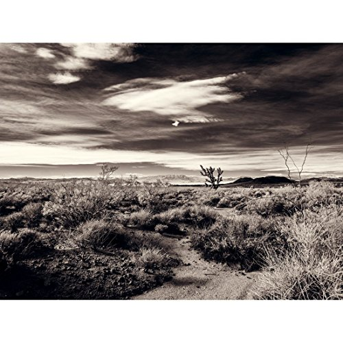 A Joshua Tree In Desert Scrub - Mojave National Preserve California Fine Art Photography Print Black and White by Spectroland