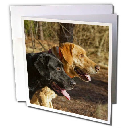 (3dRose Susan Kjellsen Photography - Dogs - One black and one yellow Labrador retriever - 12 Greeting Cards with envelopes (gc_280230_2))